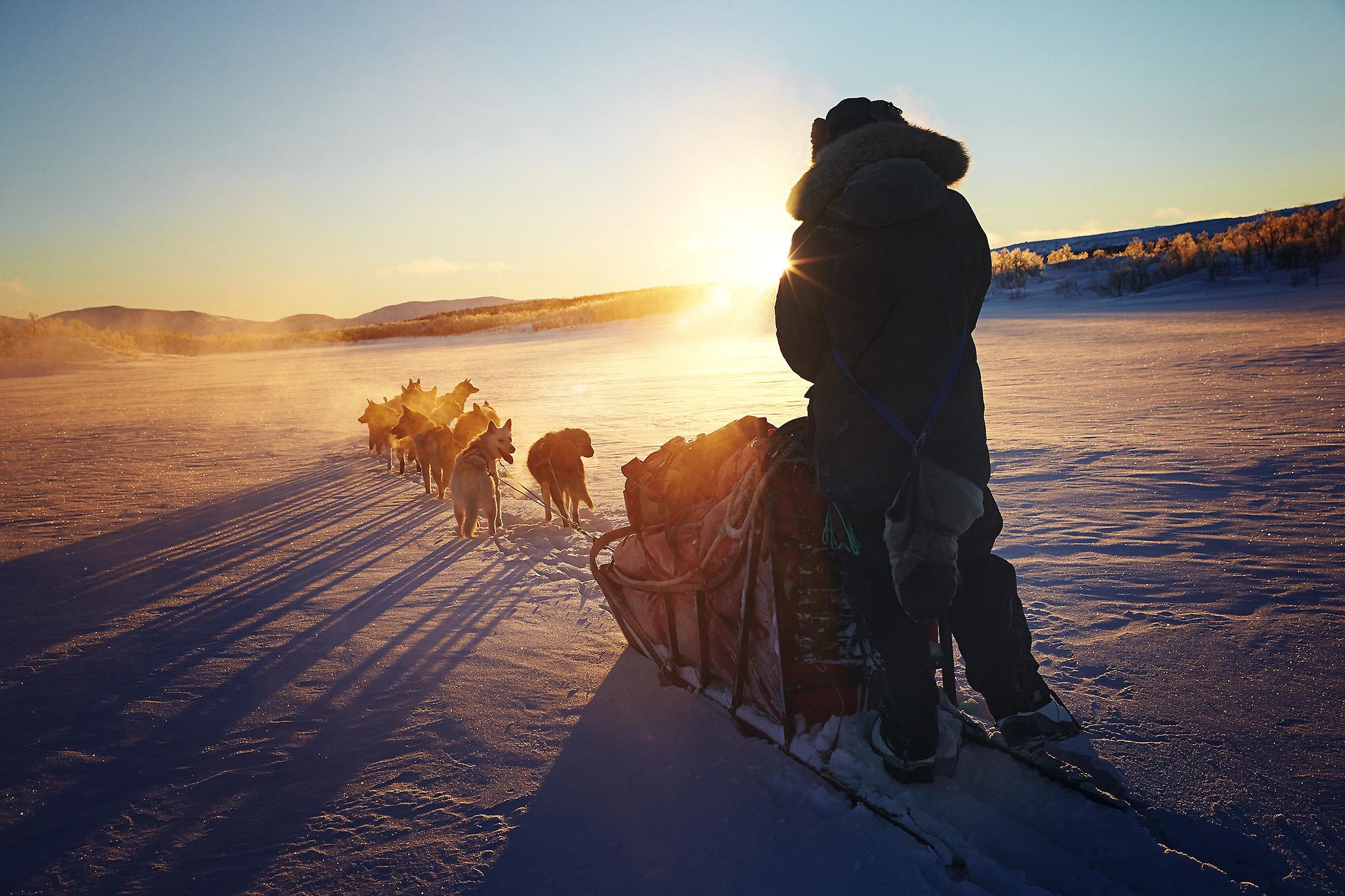 Dogsledding through Dividal and Rohkunborri National Parks. Norway.